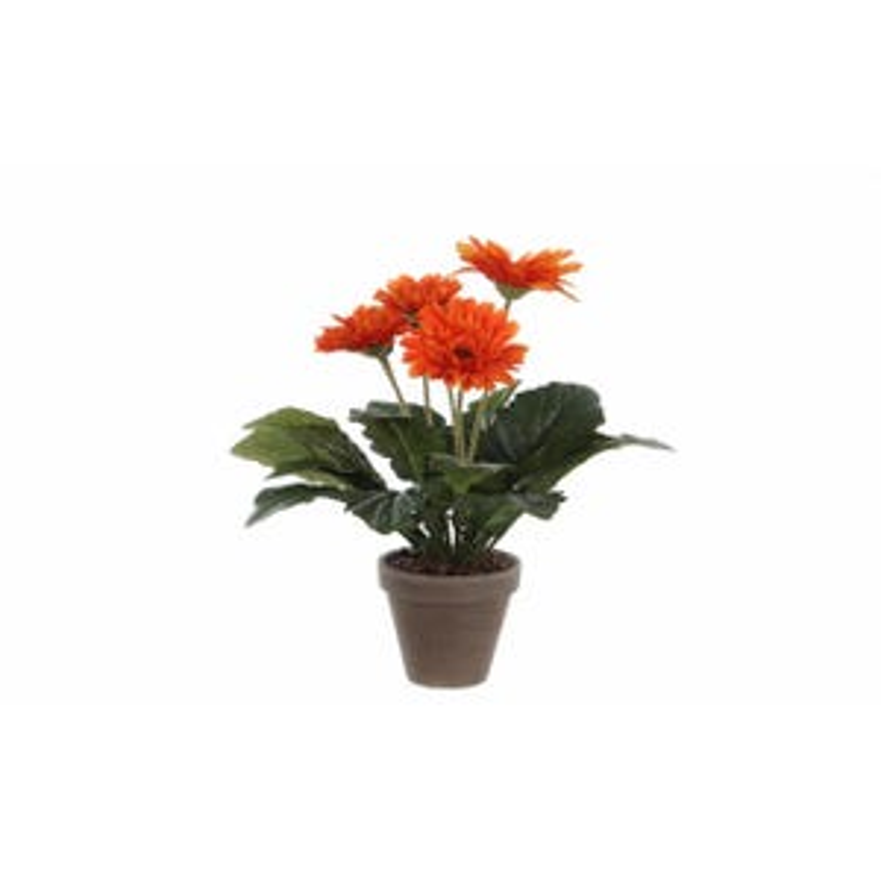 Gerbera Arancione